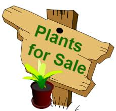 Library Plant Sale @ Sinclairville Free Library